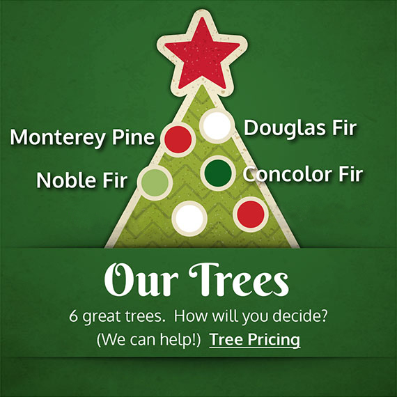 Our Trees - 6 great trees. How will you decide? We can help! Choose from Monterey Pine, Noble Fir, Grand Fir, Douglas Fir, Concolor Fir and Noble Fir 2